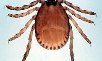 Бабезиозе група хвороб які переносять кліщі