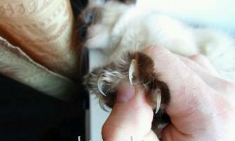 Хвороба котячих подряпин - симптоми, діагностика, лікування