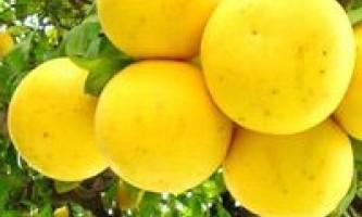 Грейпфрутова дієта - форум про дієти і схуднення - сторінка 3