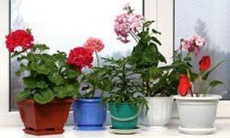 Які квіти потрібно тримати вдома?