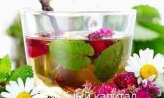 Які лікарські трави пити при застуді