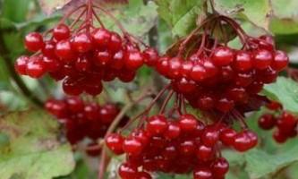 Лікування панкреатиту травами