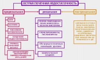 Лікування ниркової недостатності народними засобами і лікарськими травами