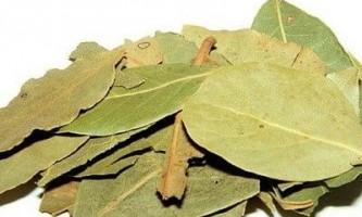 Очищення організму лавровим листом