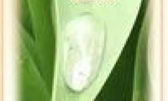 Очищення організму лікувальними травами