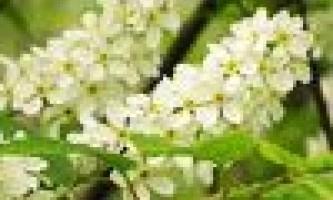 Відвари і настої з квітучих рослин