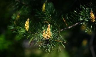 Трави при остеохондрозі: кращі настої і відвари